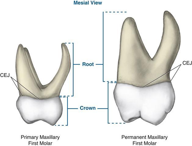 Яагаад 3-5 настай хүүхдийн шүд зайтай болдог вэ? - huuhdiin shud 2